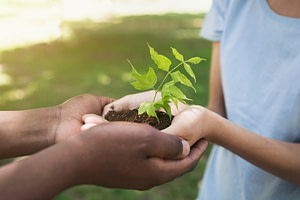 Two hands holding and caring young green plant